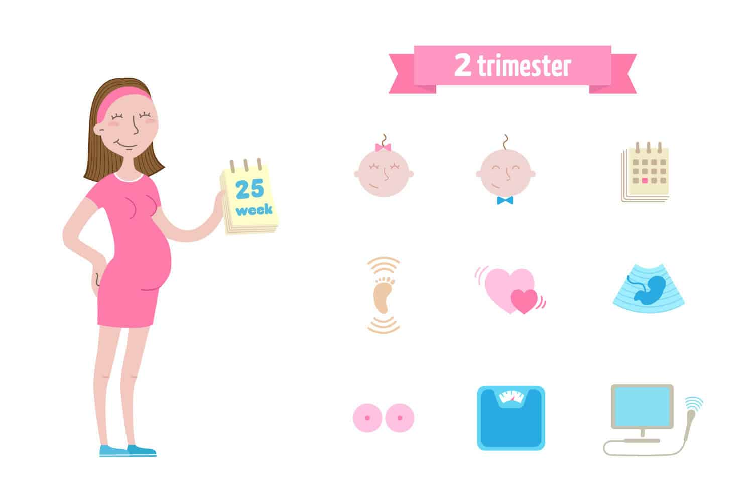 Second Trimester: In A Nutshell