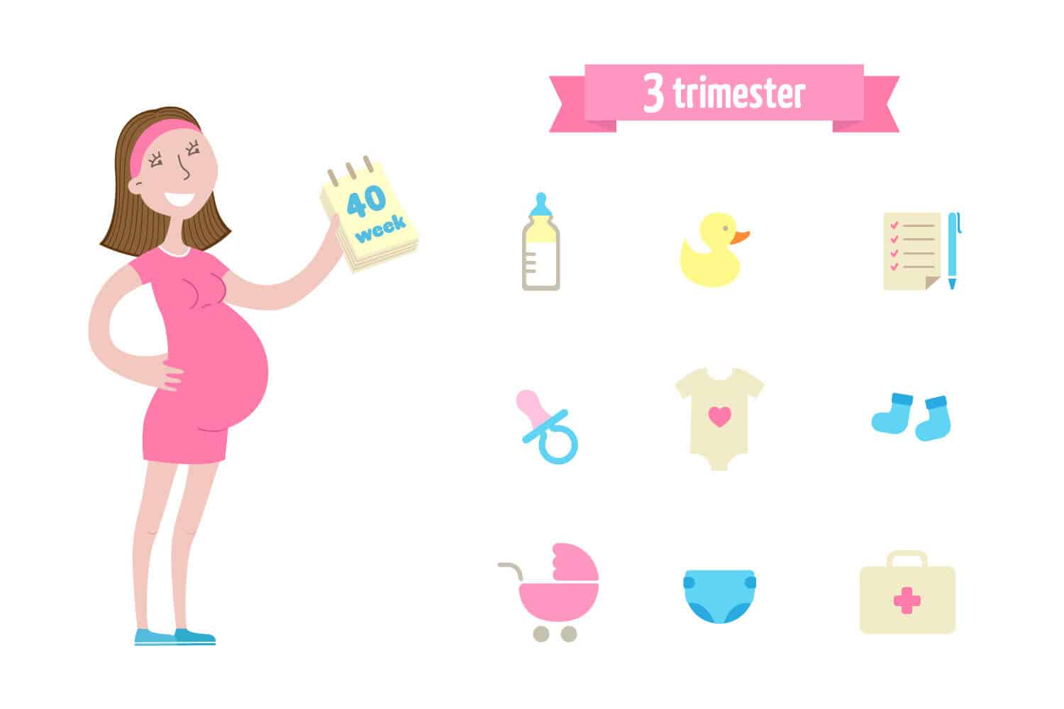 Third Trimester: In A Nutshell