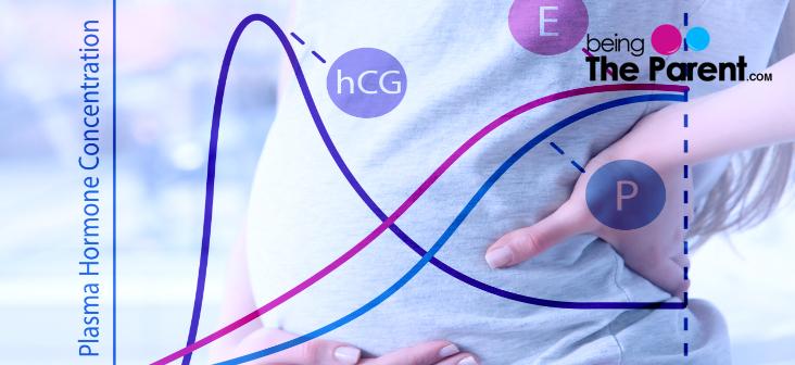 hcg-levels-pregnancy
