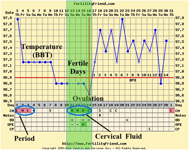 Ovulation calendar chart being the parent