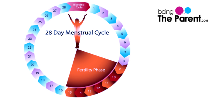 Phases_of_Menstrual_cycle