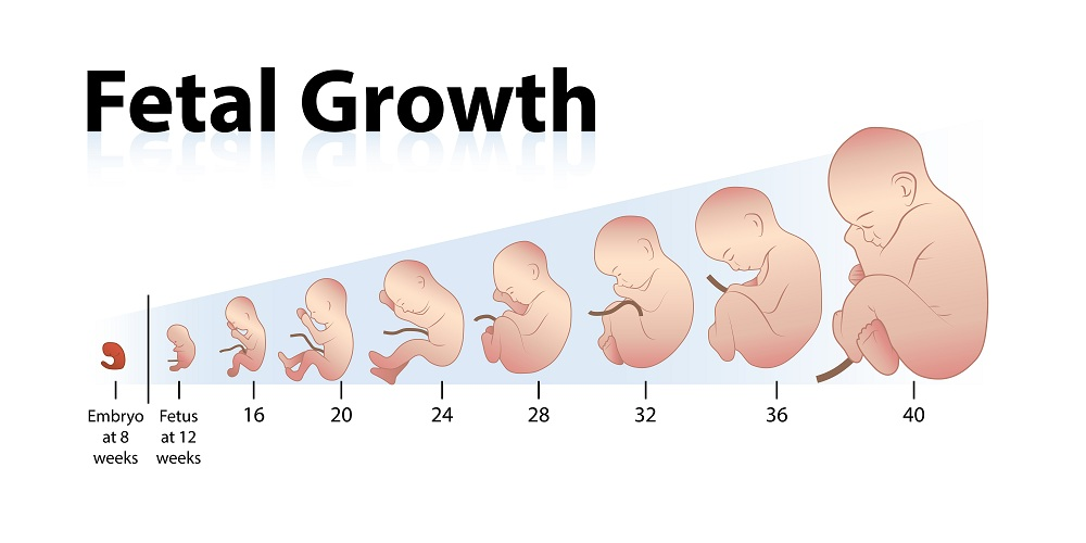 Slow Fetal Growth During Pregnancy Possible Reasons