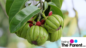 Is It Safe To Use Garcinia Cambogia While You Are Breastfeeding?