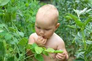 How To Protect Your Baby From Poisonous Plants
