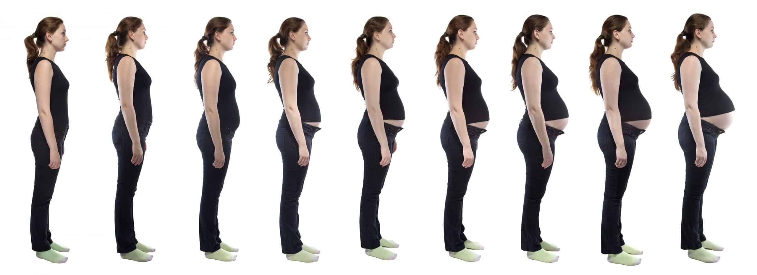 Stages Of Pregnancy By Week