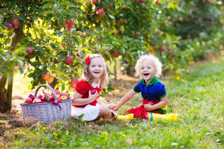 kids picking apple in the garden